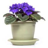 Violet Photo stock