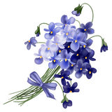 Violet. Bouquet drawn with gradient mesh Royalty Free Stock Photos