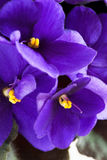 Violet Images stock
