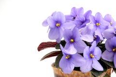 Violet Photo libre de droits