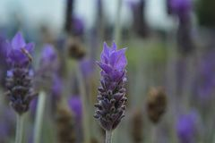 Violet3 imagenes de archivo