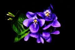 violet Photos stock