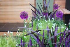 Violet allium flowers Stock Photo