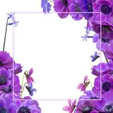 Anemone bouquet with frame Stock Images