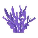 Violet Antler Coral, scogliera tropicale Marine Invertebrate Animal Vector Icon royalty illustrazione gratis