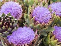 Violet artichoke flowers. Closeup shot of some violet artichoke flowers Stock Images