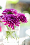 Violet aster flower in glass Royalty Free Stock Images