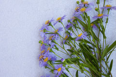 Violet aster flowers frame on gray background. Top view. stock photography