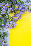 Violet aster flowers frame on yellow and gray background. Top vi Royalty Free Stock Photography