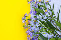 Violet aster flowers frame on yellow and gray background. Top vi Royalty Free Stock Photos
