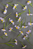 Violet aster on stone background. Floral frame. Top view. Royalty Free Stock Photos
