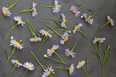 Violet aster on stone background. Floral frame. Top view. Royalty Free Stock Photography