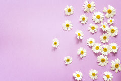Violet background with camomiles and copy space. Stock Photos