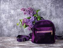 Violet backpack and lilac flower. Spring background Stock Photography
