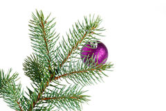 Violet ball on the Christmas tree Stock Images