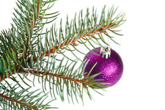 Violet ball on the Christmas tree Stock Photo