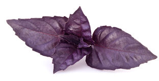 Violet basil leaves isolated on a white. Royalty Free Stock Photos