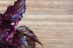 Violet basil leaves Royalty Free Stock Image