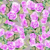Violet begonia flower, watercolor, pattern seamless Stock Photography