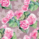 Violet begonia, lily flower, watercolor, pattern seamless Royalty Free Stock Photo