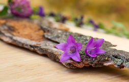 Violet bell-flowers on light board Stock Photography