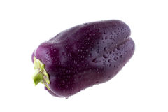 Violet bell pepper. On white background Royalty Free Stock Images