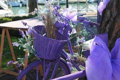 Violet bicycle. For the feast of lavender everything is colored purple Royalty Free Stock Photo