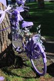 Violet bicycle. For the feast of lavender everything is colored purple Stock Photo