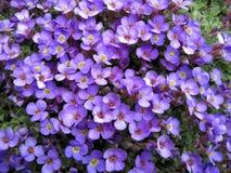 Violet bloemenpatroon Royalty-vrije Stock Foto