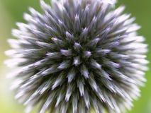 Violet blossom Stock Photo