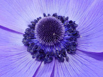 Violet blossom Stock Photography