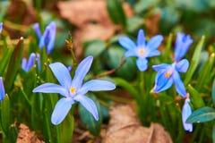 Violet Blue Immagini Stock Libere da Diritti