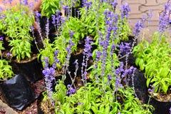 Violet blue color flower plant Royalty Free Stock Images