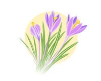 Violet-blue crocus spring flower. On  yellow sun background. Vector illustration EPS10 Royalty Free Stock Photos