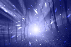 Violet blue fantasy foggy forest lights Royalty Free Stock Image
