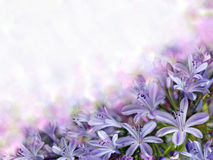 Violet bluebells on blurred background Royalty Free Stock Photos
