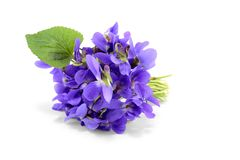 Violet bouquet  on white Stock Image
