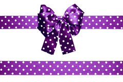 Violet bow and ribbon with white polka dots made from silk Stock Image
