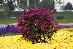 Violet bush  Stock Images