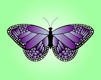 Violet butterfly Stock Images