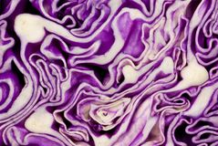 Violet cabbage cut. Cutted on half violet cabbage Stock Photography