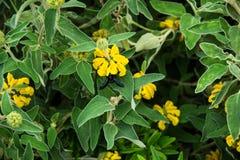 Violet Carpenter Bee en un fondo floral Foto de archivo libre de regalías