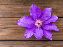 Violet clematis flower on the wooden planks Royalty Free Stock Photography