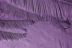 Violet color of cycad leaf details. Violet color of cycad leaves on towel background Stock Photo