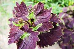 Violet Color Leaf en Bloem royalty-vrije stock fotografie