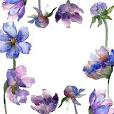Violet cosmos flower floral botanical flowers. Watercolor background illustration set. Frame border ornament square. Violet cosmos flower floral botanical stock illustration