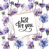 Violet cosmos flower floral botanical flowers. Watercolor background illustration set. Frame border ornament square. Violet cosmos flower floral botanical royalty free stock photography