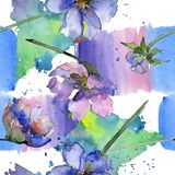 Violet cosmos flower floral botanical flower. Watercolor background illustration set. Seamless background pattern. Violet cosmos flower floral botanical flower royalty free illustration