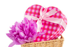 Violet  crocus flowers  and gift box Royalty Free Stock Image