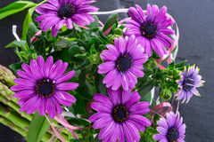 Violet daisies Stock Images